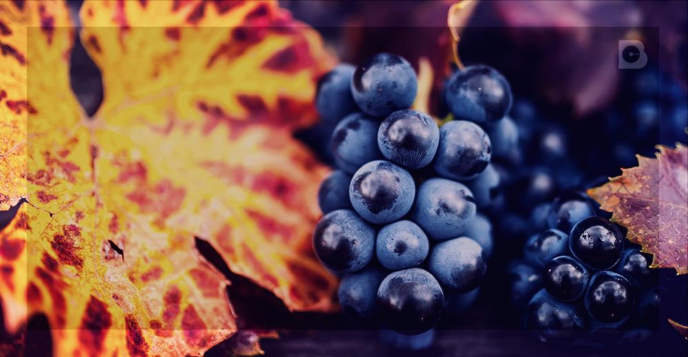 antioxidantes-e-envelhecimento-precoce-4